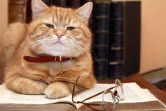 De Kat van de wetenschapper Stock Afbeeldingen