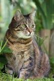 De kat van de zitting Royalty-vrije Stock Foto's