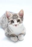 De kat van de zitting Royalty-vrije Stock Afbeeldingen