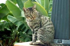 De kat van de zitting Stock Foto's