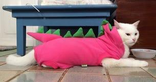 De kat van Dino Stock Fotografie