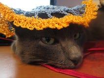 De kat van Fanny Stock Foto