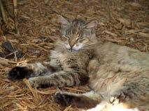 De kat van Hemingway in Key West Stock Afbeeldingen