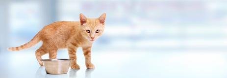 De kat van het gemberkatje stock afbeelding