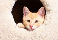 De kat van het gemberkatje royalty-vrije stock afbeelding