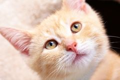 De kat van het gemberkatje royalty-vrije stock foto's