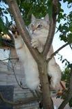 De kat van het gestreepte katpunt stock foto