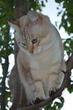 De kat van het gestreepte katpunt stock foto's