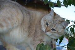 De kat van het gestreepte katpunt stock fotografie