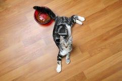 De kat van het huis Stock Foto