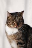 De kat van het huis Stock Foto's