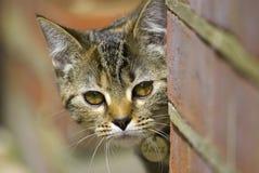 De kat van het huisdier Stock Foto's