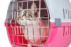 De kat van het huisdier in een kooi wordt opgesloten die. royalty-vrije stock afbeeldingen