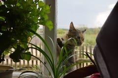 De kat van het land stock afbeelding