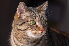 De kat van het mengen-ras Royalty-vrije Stock Afbeelding