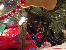 De kat van Kerstmis Royalty-vrije Stock Fotografie