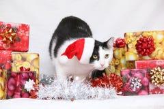 De kat van Kerstmis Stock Afbeeldingen