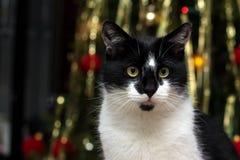 De kat van Kerstmis Stock Afbeelding