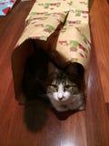 De kat van Kerstmis Royalty-vrije Stock Afbeelding