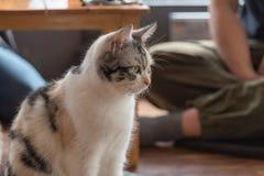 De Kat van de koffiewinkel Stock Afbeeldingen