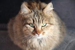De kat van maart Stock Afbeeldingen