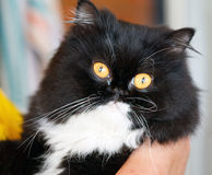 De kat van Nice Stock Afbeeldingen