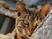 De kat van ogen stock afbeelding