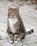 De kat van Tom royalty-vrije stock fotografie