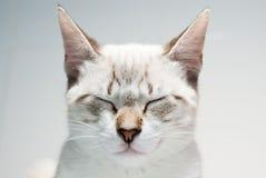 De kat van Zen Stock Afbeeldingen