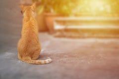 De kat van de zitting Royalty-vrije Stock Afbeelding