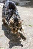 De kat ving de muis Royalty-vrije Stock Afbeeldingen
