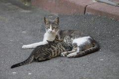 De kat voedt klein De zomer van 2015 Stock Foto's