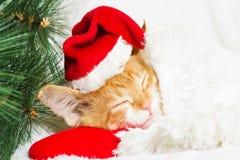 de kat wacht op het nieuwe jaar Stock Foto's