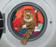 De kat is in de wasmachine stock afbeeldingen