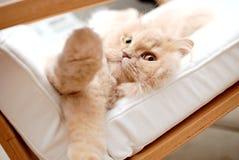 De kat zegt hello aan iedereen Stock Afbeeldingen