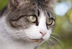 De kat ziet eruit Stock Afbeeldingen