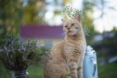 De kat zit dichtbij bloemen in de straat stock afbeeldingen