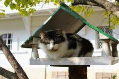 De kat zit in een vogelvoeder in het park in het landgoed van Telling Leo Tolstoy in Yasnaya Polyana stock afbeeldingen