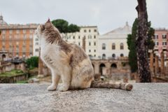 de kat zit en kijkt awayon Largo di Torre Argentina, een vierkant in Rome, Italië Er zijn vele katten levend in oude Roman ruïnes royalty-vrije stock afbeeldingen