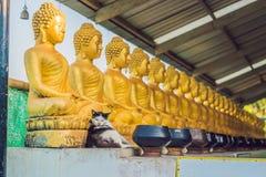 De kat zit op de achtergrond van de standbeelden van Boedha, Gezicht van gouden Boedha, Thailand, Azië Stock Fotografie