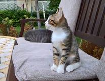 De kat zit op de bank op hoofdkussen Royalty-vrije Stock Foto