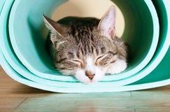 De kat zit op de mat voor yoga Stock Foto
