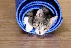 De kat zit op de mat voor yoga Royalty-vrije Stock Foto's