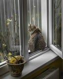 De kat zit op de vensterbank Royalty-vrije Stock Afbeelding