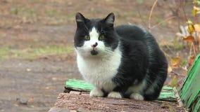 De kat zit op een bank stock video