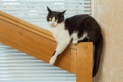 De kat zit op een houten traliewerk Stock Foto