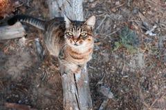 De kat zit op een tak in het bos en ziet omhoog eruit Royalty-vrije Stock Afbeeldingen