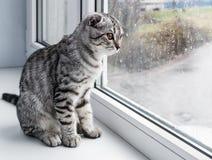 De kat zit op een vensterbank Royalty-vrije Stock Afbeelding