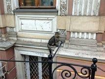 De kat zit op een vensterbank Stock Fotografie
