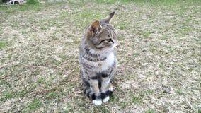 De kat zit in de tuin stock foto